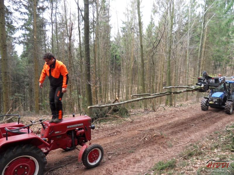 Holz_machen_03-2012_026