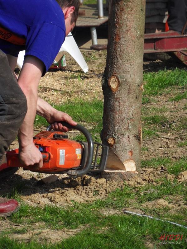 Holz_machen_03-2012_090