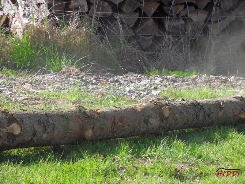 Holz_machen_03-2012_093
