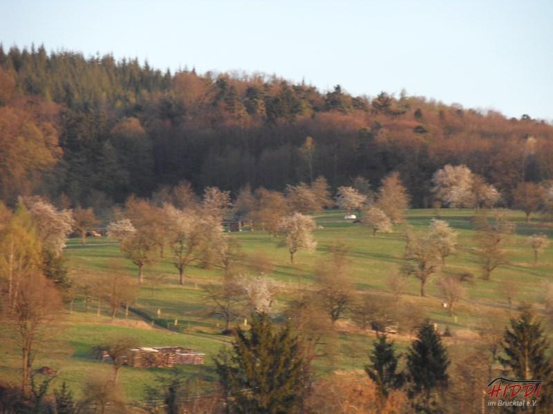 Holz_machen_03-2012_103