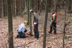 Holz_machen_03-2012_017